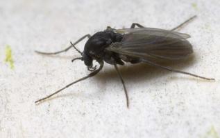 Diptera 8815