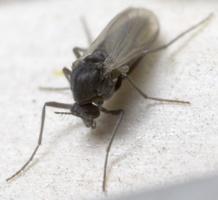 Diptera 8816
