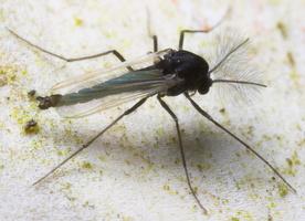 Diptera 8820