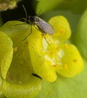 Diptera 8833