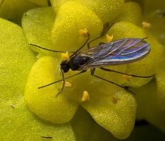 Diptera 8839