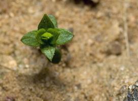 Plant 9336