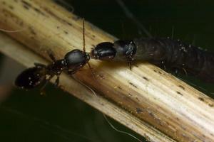 Bethylidae 9941