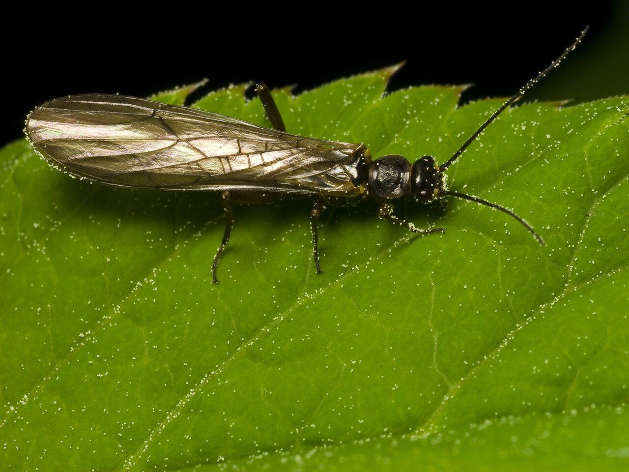 Plecoptera-9961.jpg