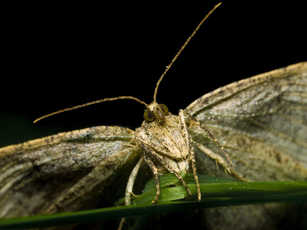 Lepidoptera-0141.jpg