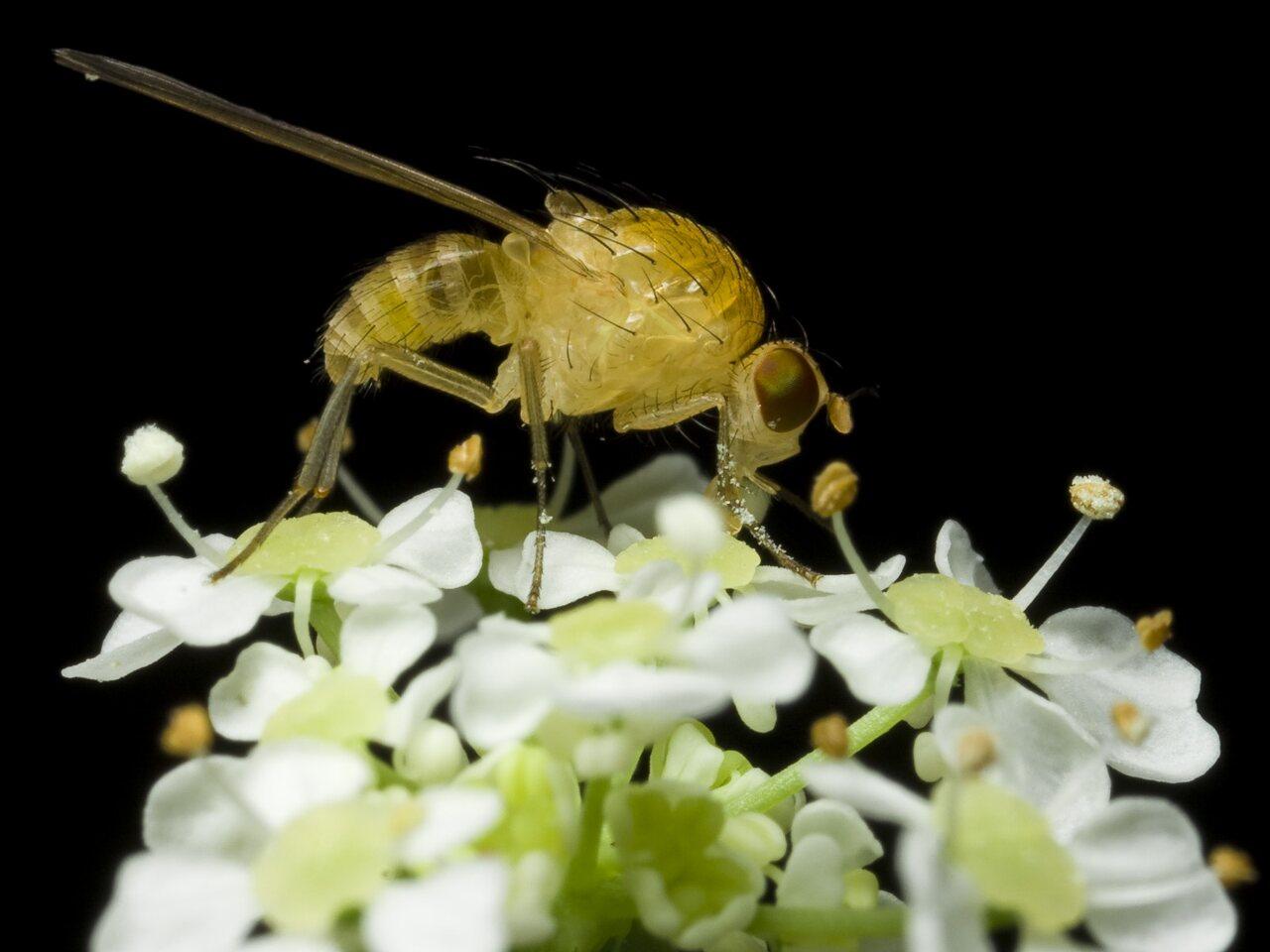 Diptera-0250.jpg