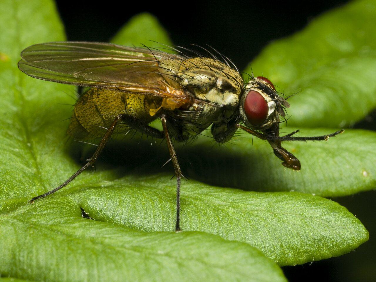 Diptera-0479.jpg