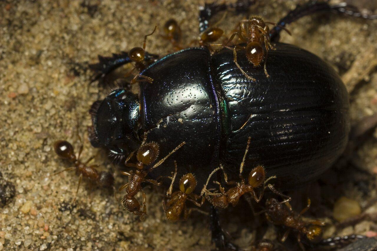 Formicidae-0483.jpg