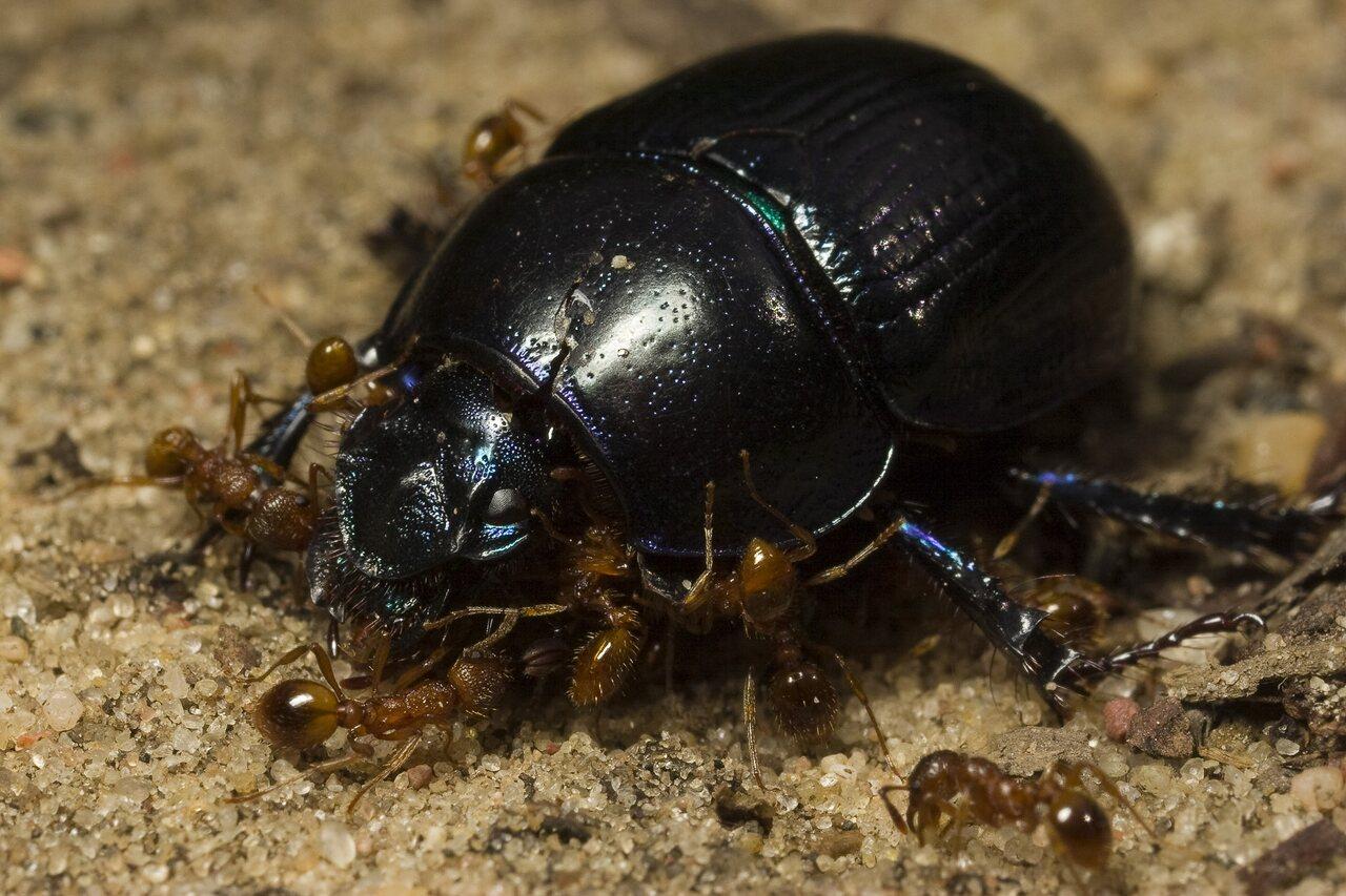 Formicidae-0485.jpg