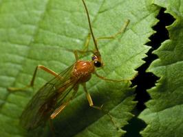Hymenoptera 0600