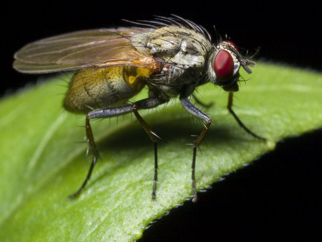 Diptera-0631.jpg