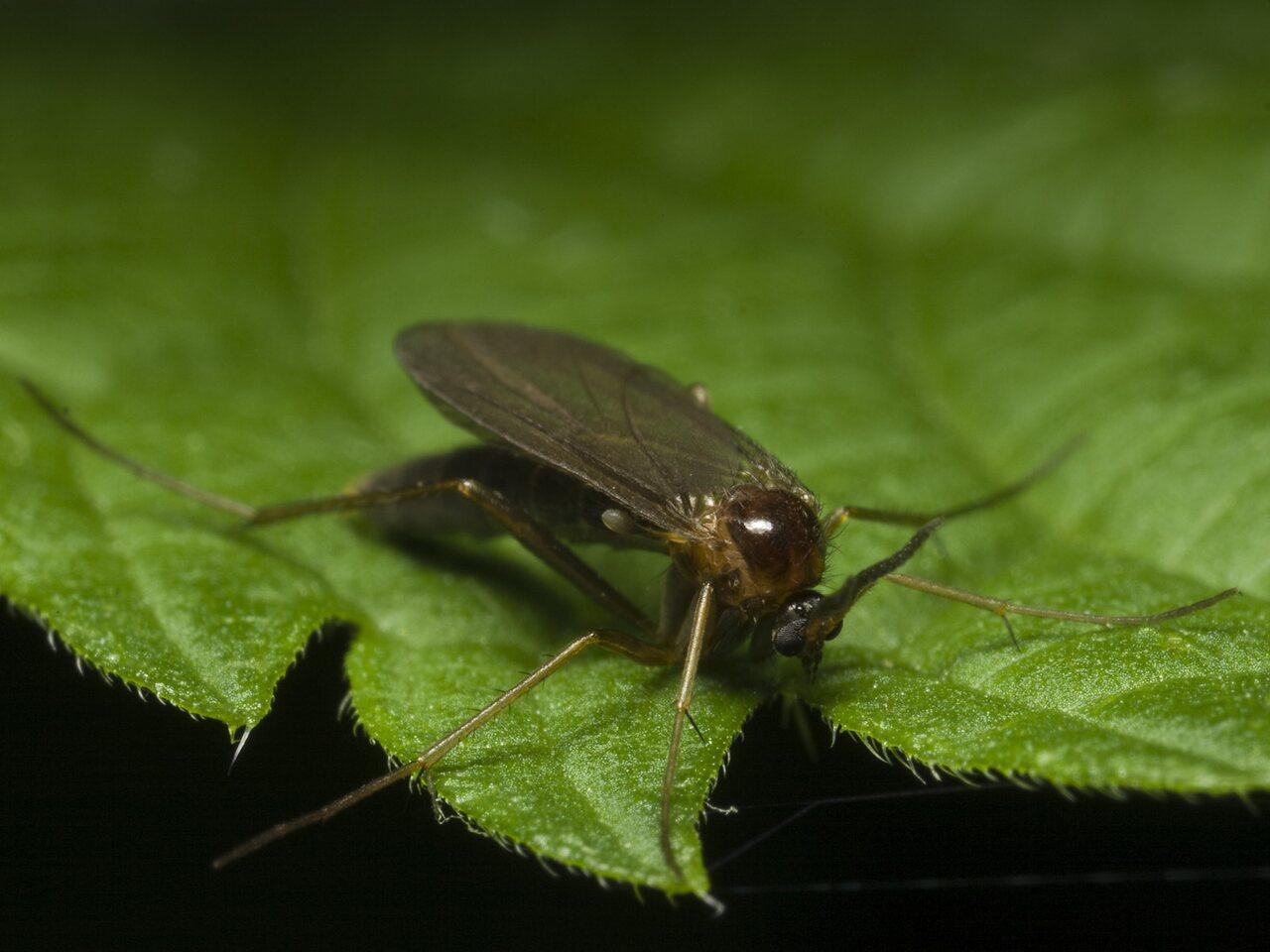 Diptera-0637.jpg