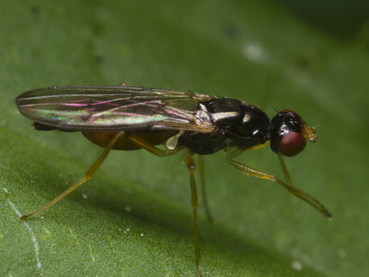 Diptera-1290.jpg