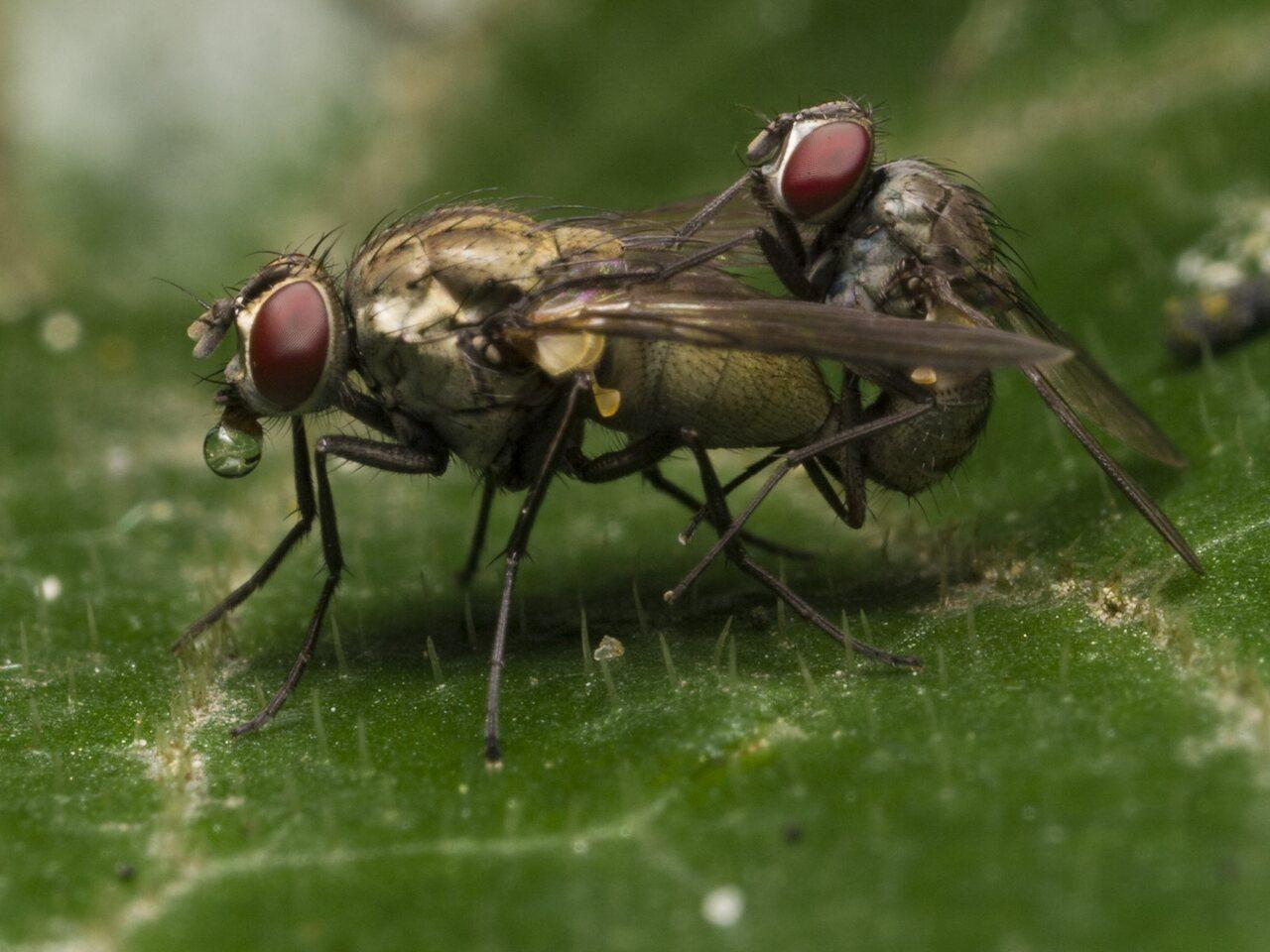 Diptera-1294.jpg