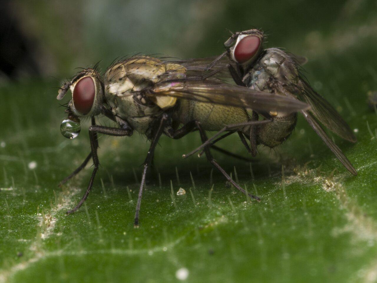 Diptera-1295.jpg