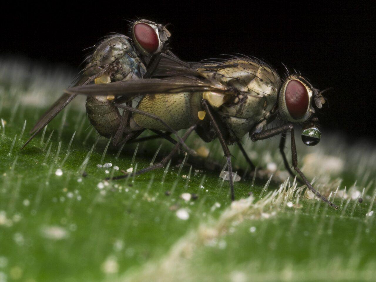 Diptera-1296.jpg