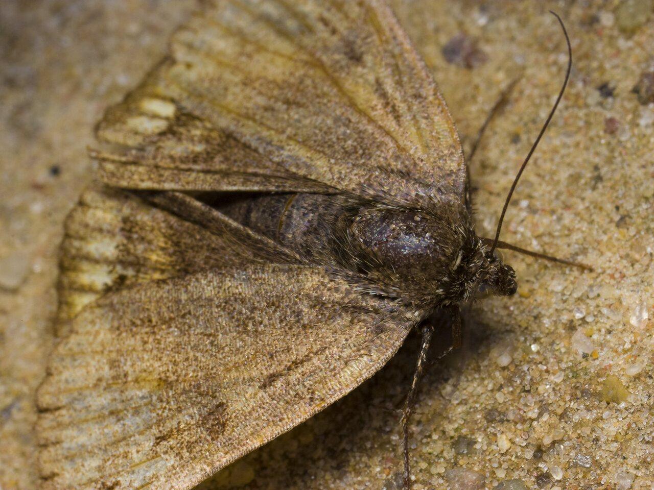 Lepidoptera-1561.jpg