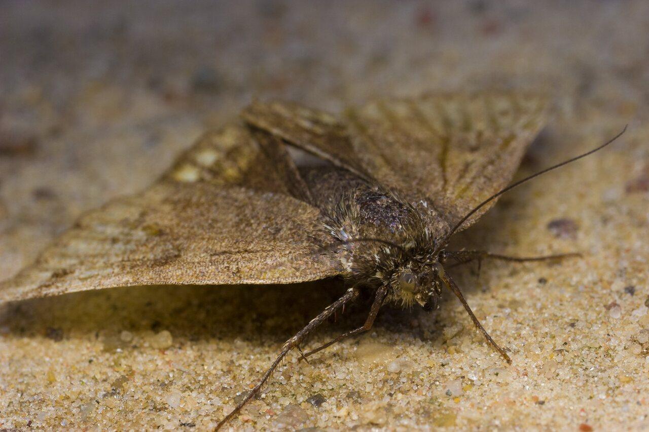 Lepidoptera-1562.jpg