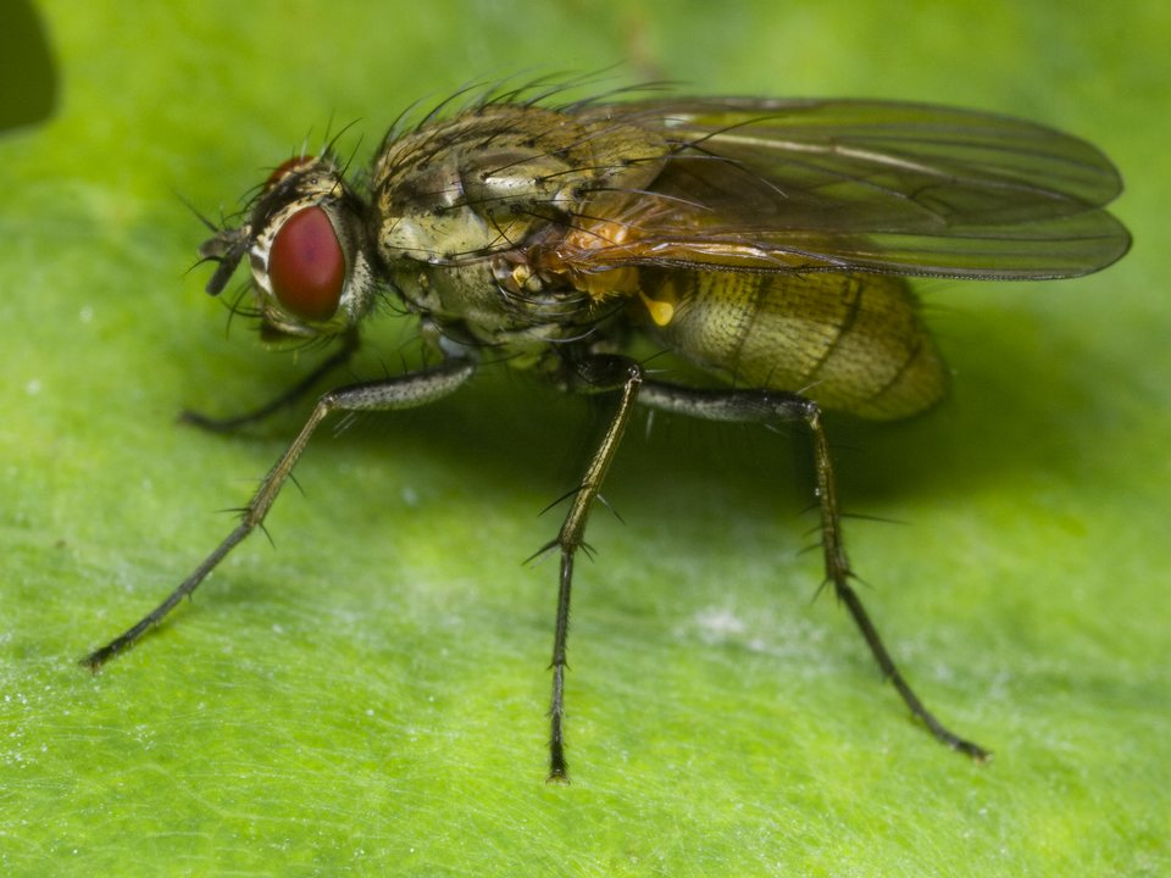Diptera-1664.jpg