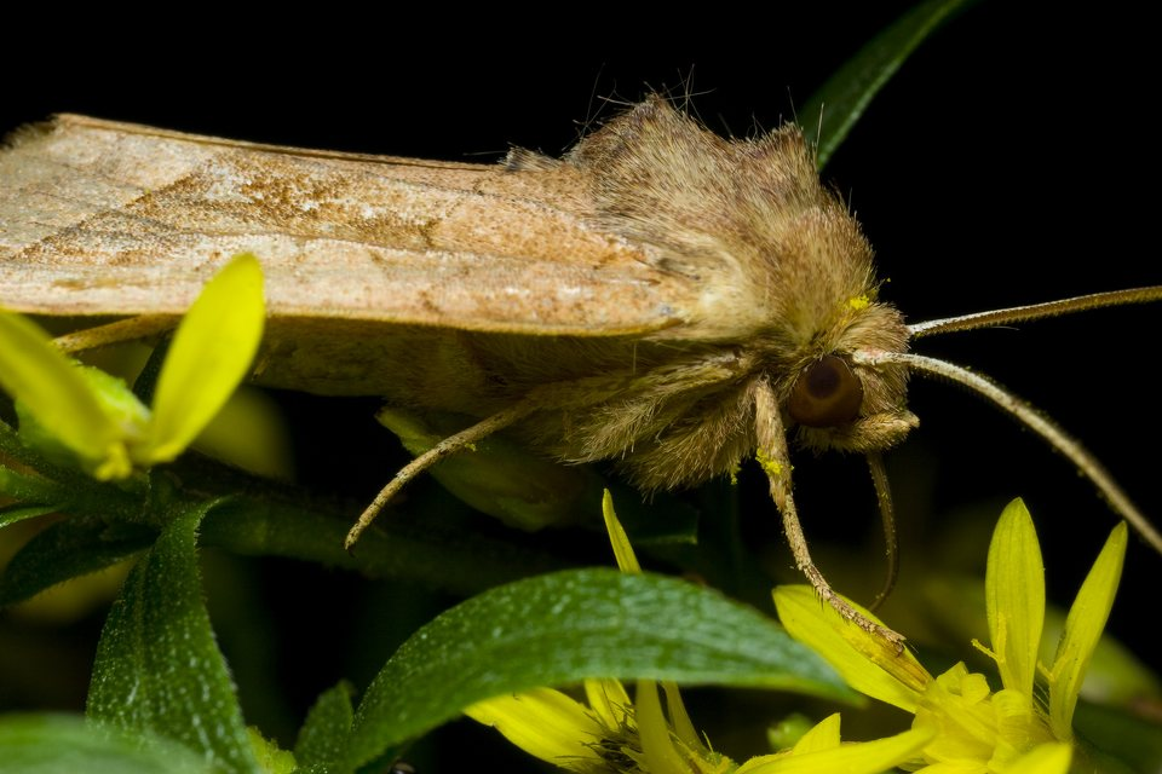 Lepidoptera-2476.jpg