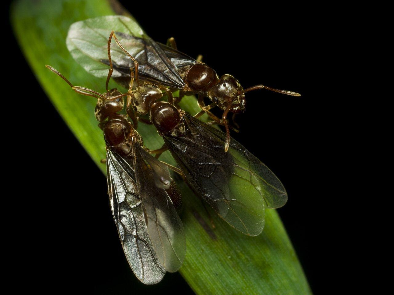 Formicidae-2482.jpg