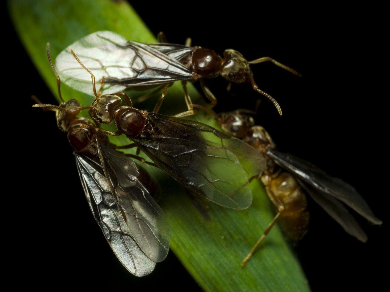 Formicidae-2483.jpg