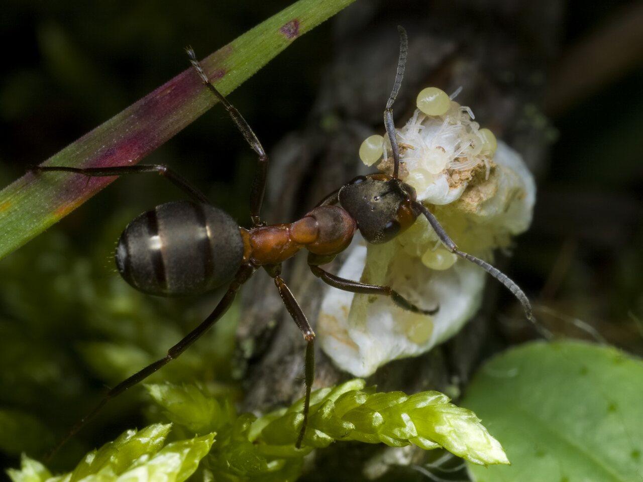 Clubionidae-2544.jpg