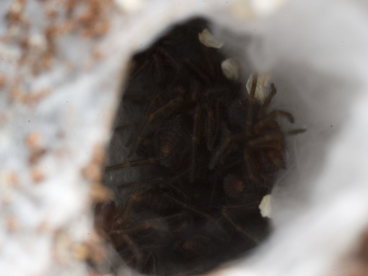 Araneae-2565.jpg