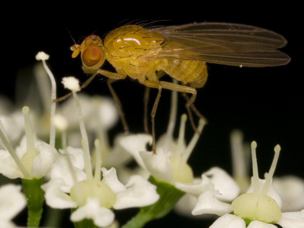 Diptera-3346.jpg