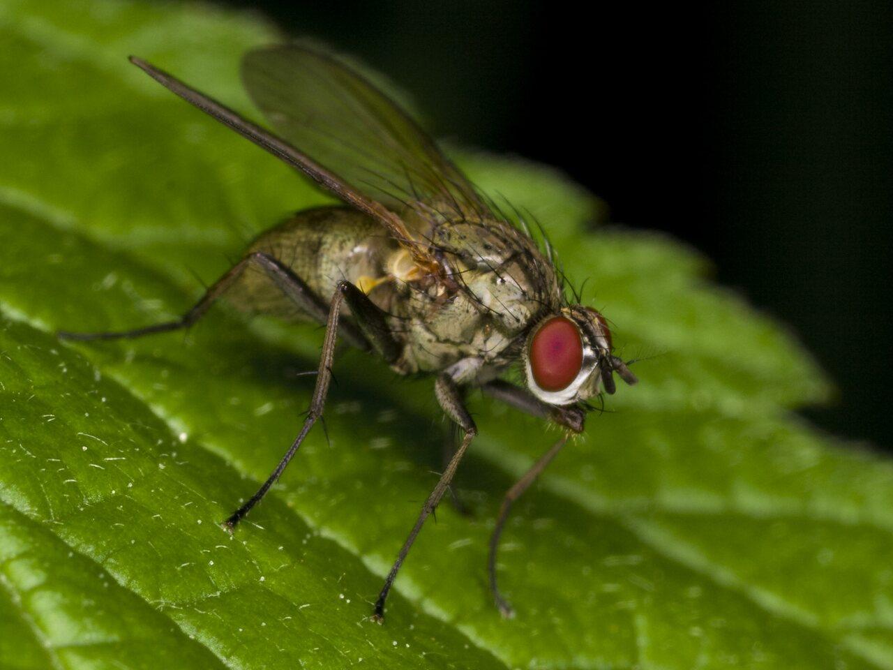 Diptera-3374.jpg