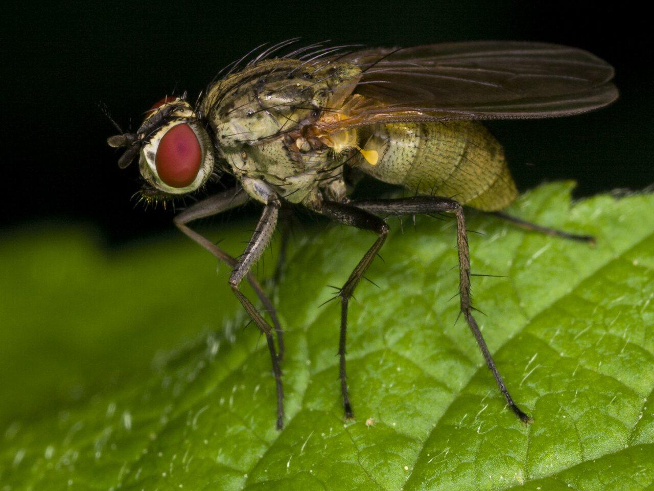 Diptera-3375.jpg