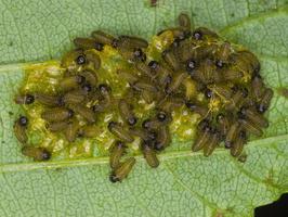larvae 3422