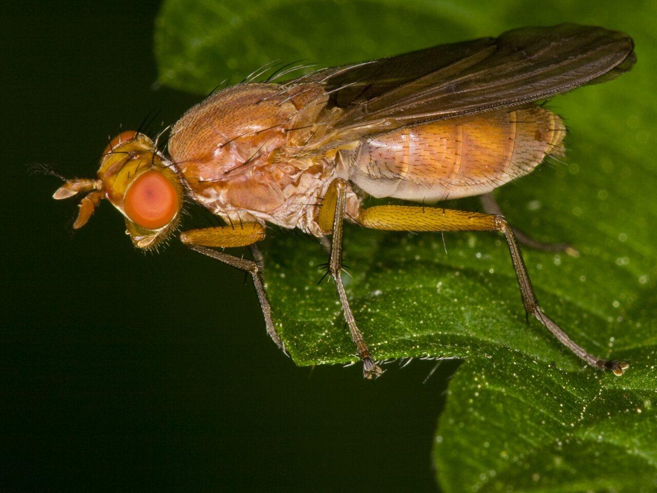 Diptera-3655.jpg