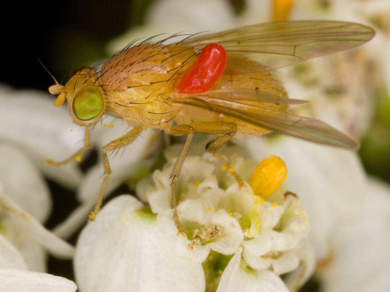 Diptera-3715.jpg