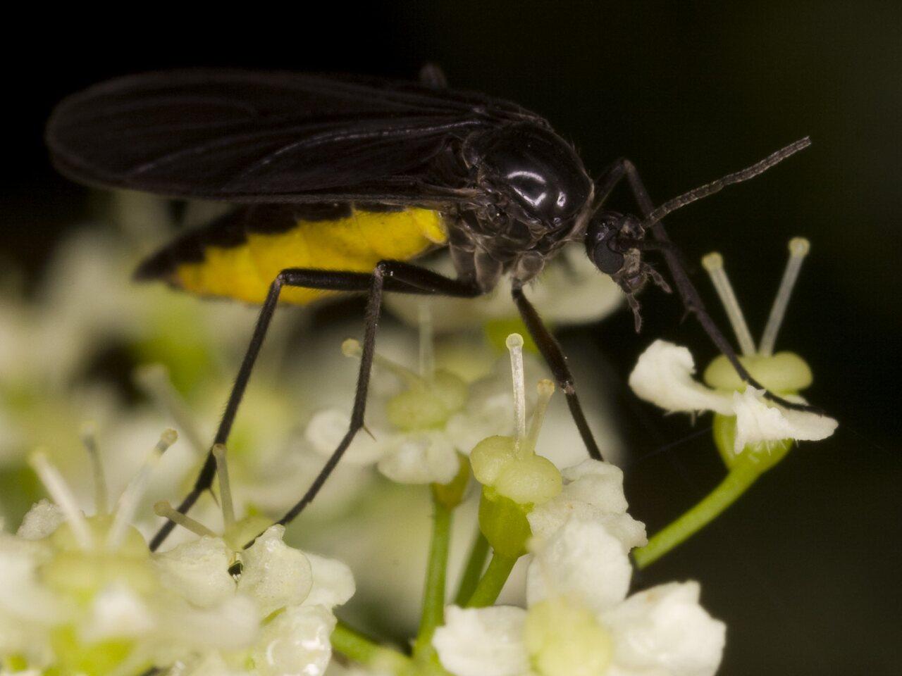 Diptera-3721.jpg