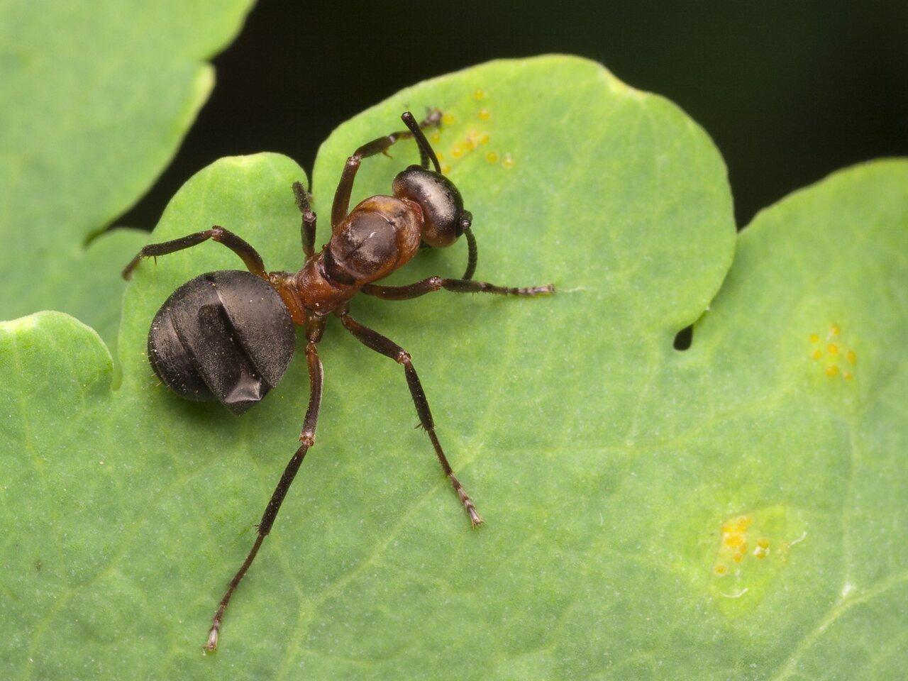 Formicidae-4407.jpg
