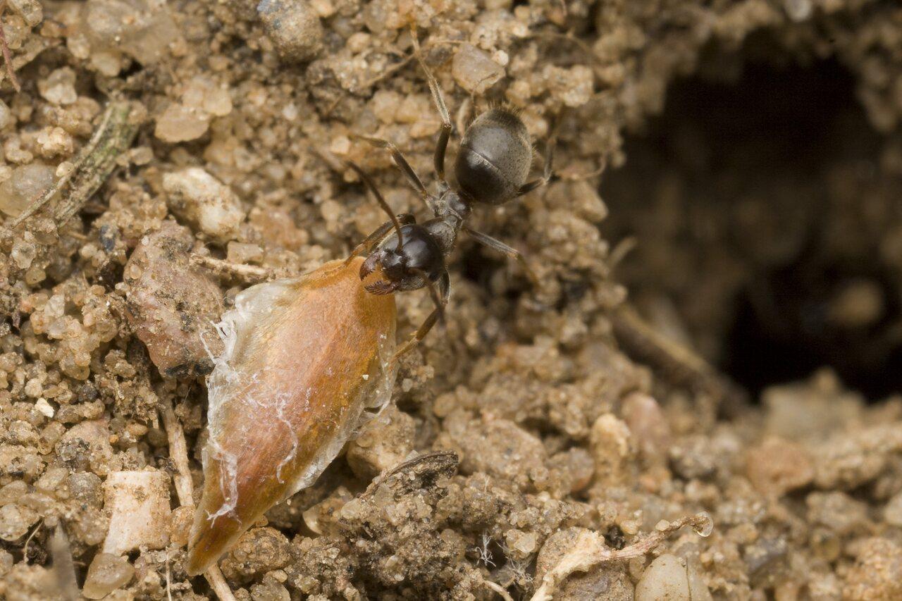 Formicidae-0150.jpg
