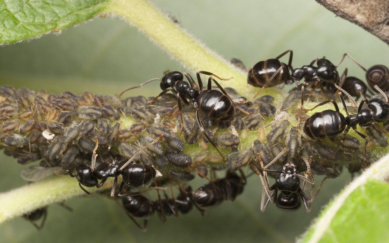 Formicidae-9970-001.jpg