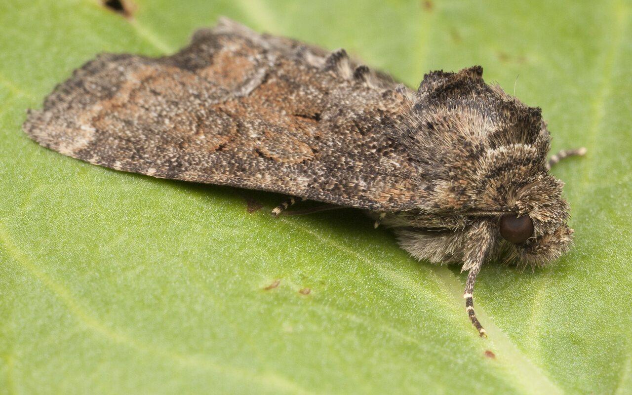 Lepidoptera-0649.jpg