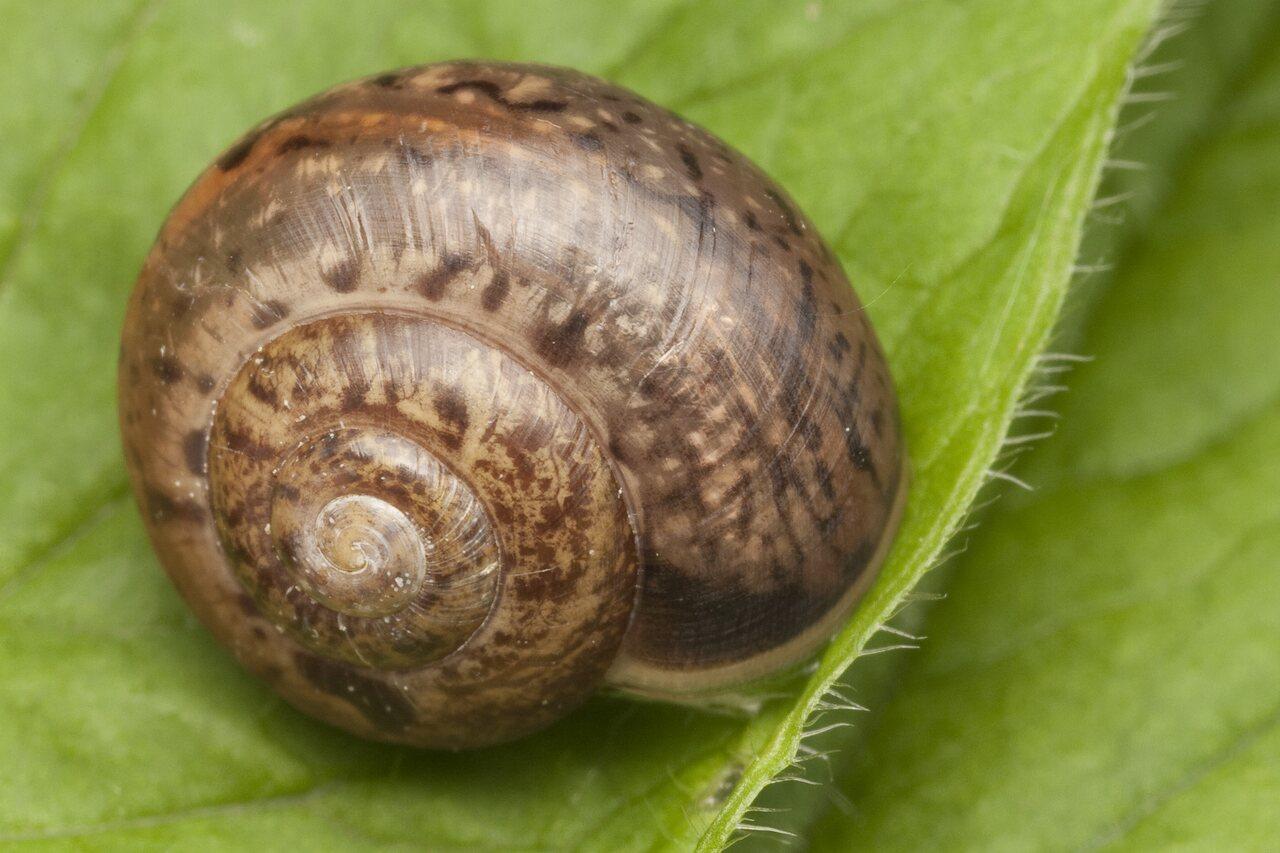 Mollusca-0776.jpg