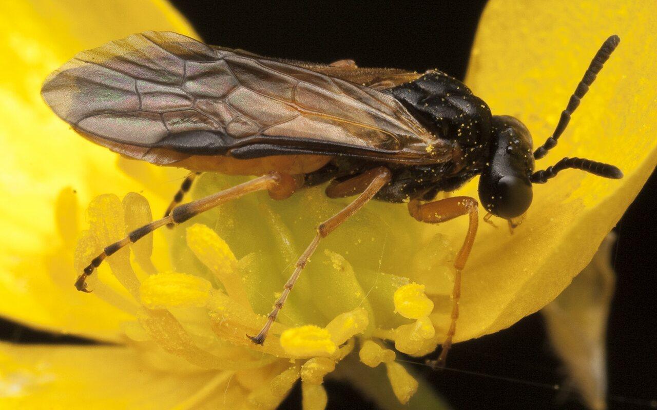 Hymenoptera-0795.jpg