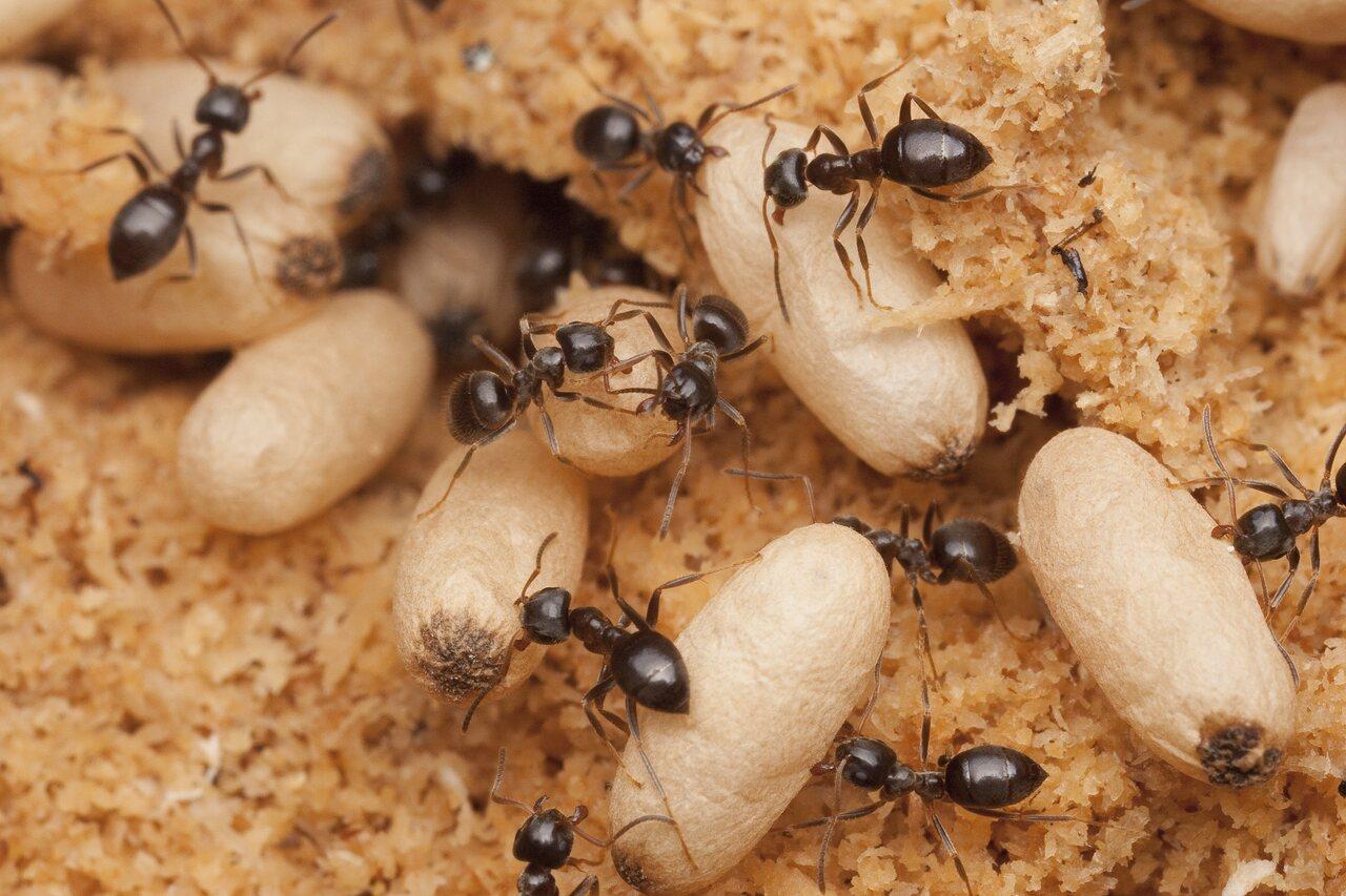 Formicidae-0834.jpg