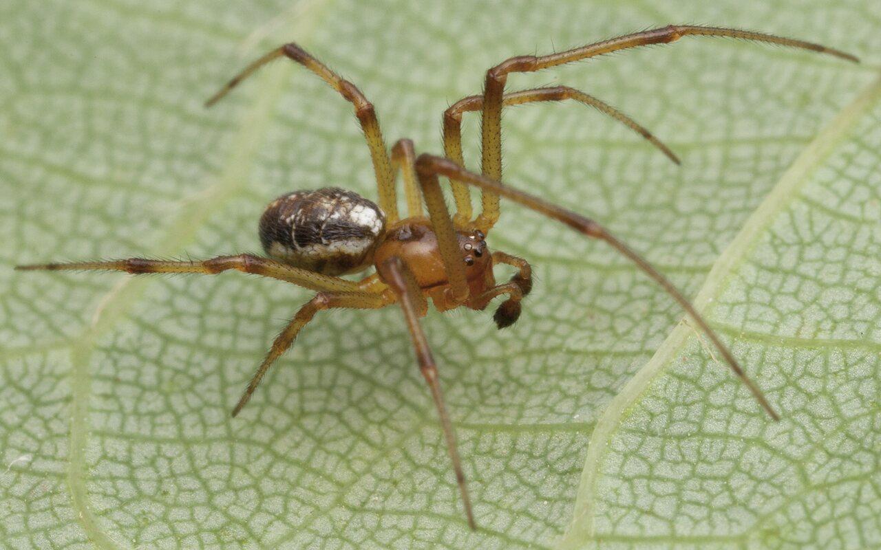 Araneae-0866.jpg