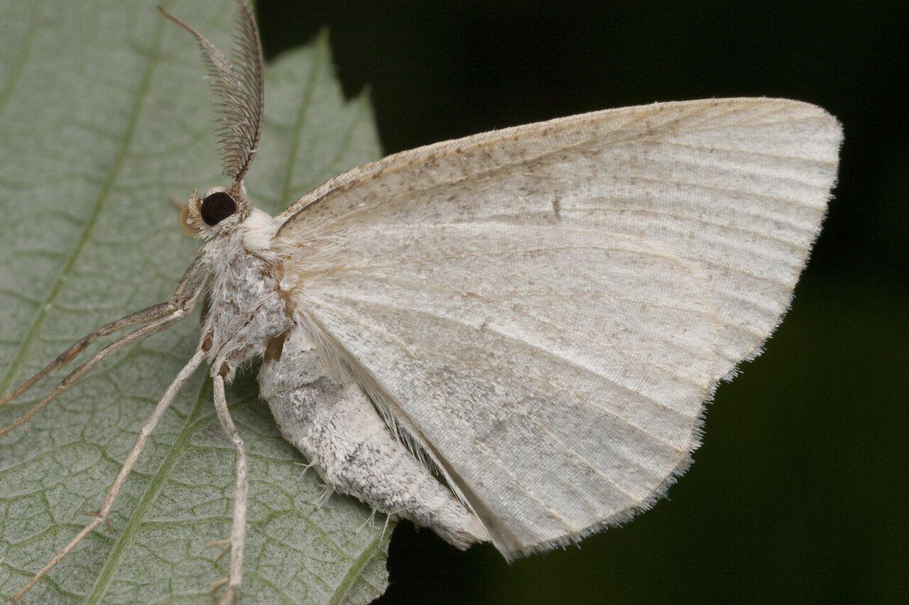 Lepidoptera-0982.jpg