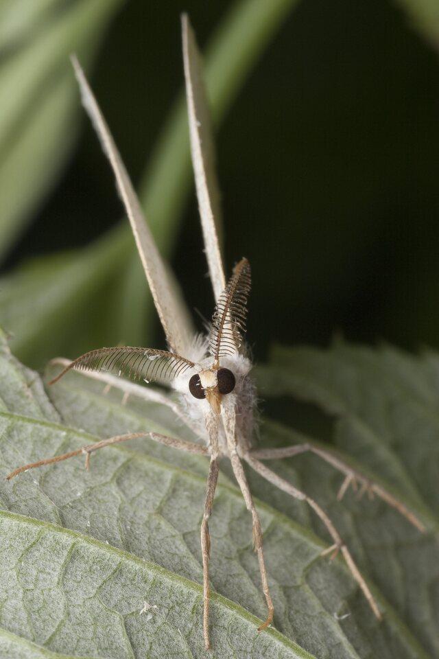 Lepidoptera-0984.jpg