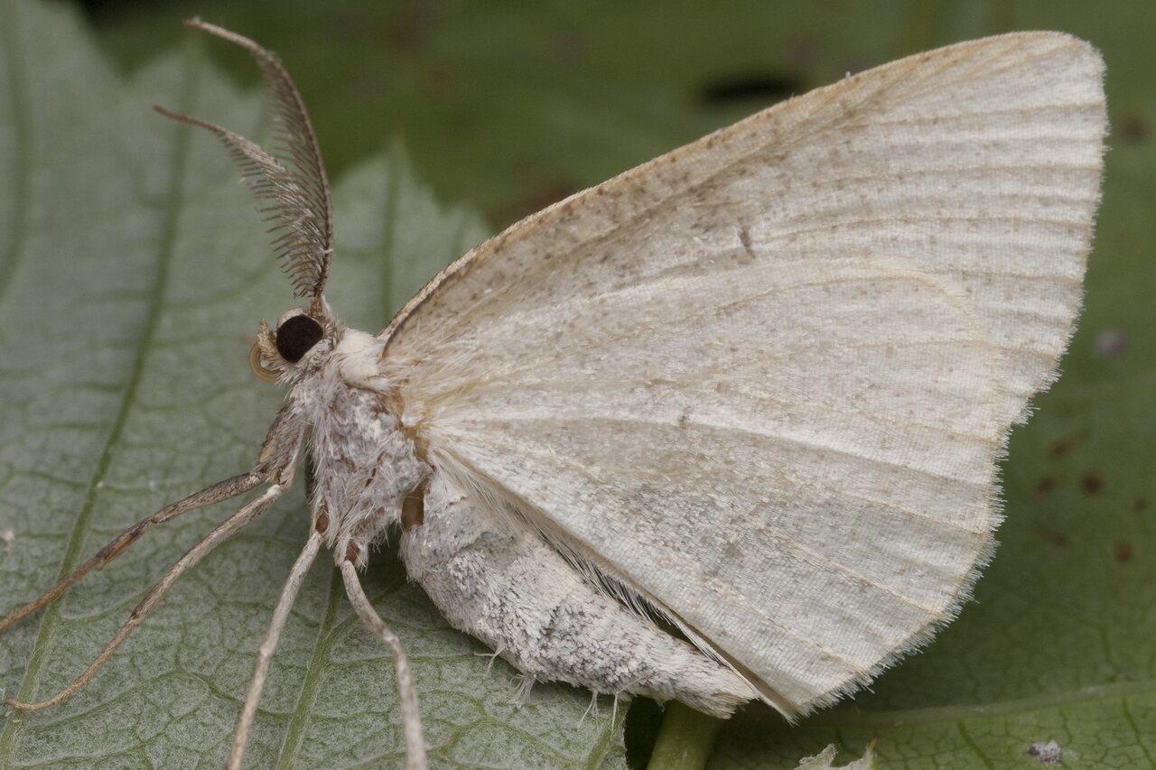 Lepidoptera-0986.jpg