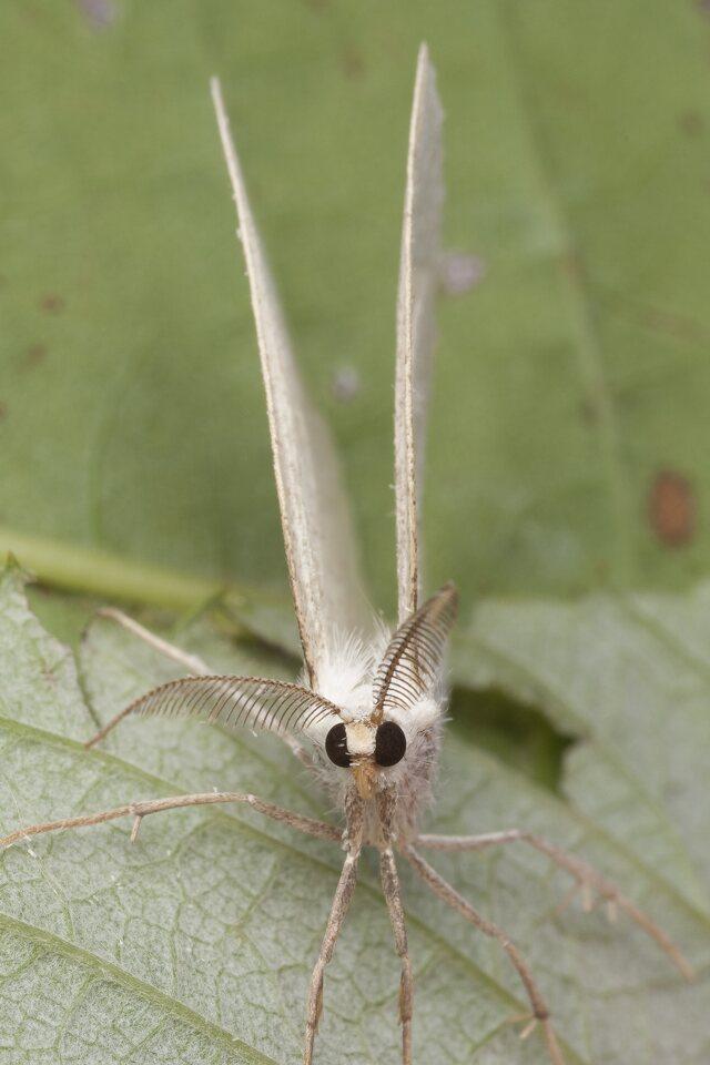 Lepidoptera-0987.jpg