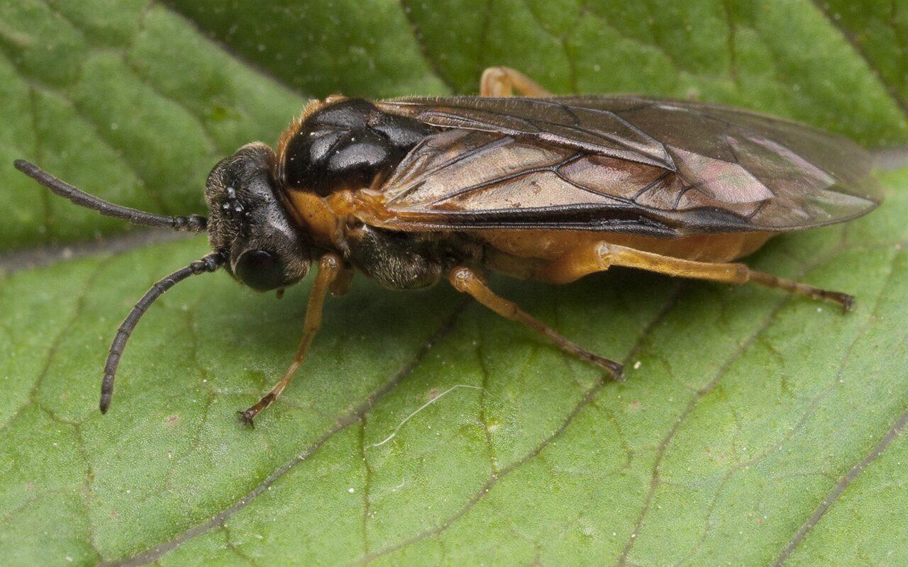 Hymenoptera-1030.jpg