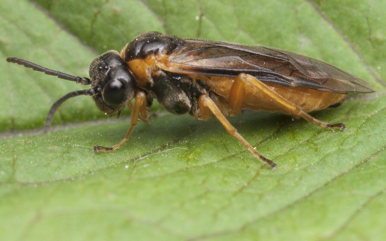 Hymenoptera-1033.jpg