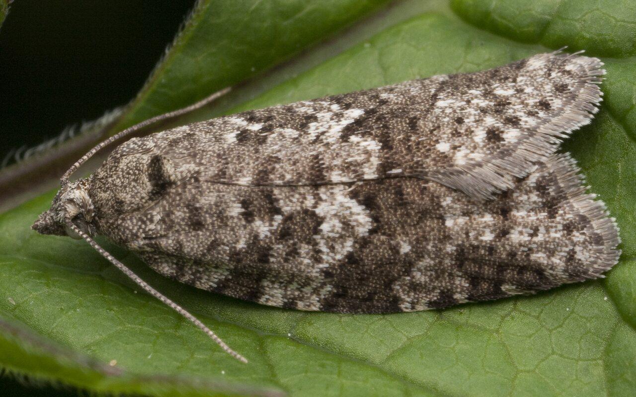 Lepidoptera-1042.jpg